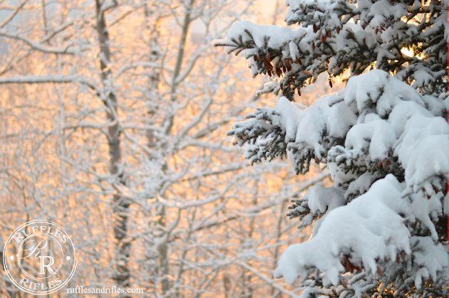 Snowy Alaskan Trees at Sunset